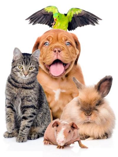 Gruppi Telegram > Animali